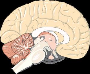 Rehabilitacja po udarze mózgu - RST Kraków